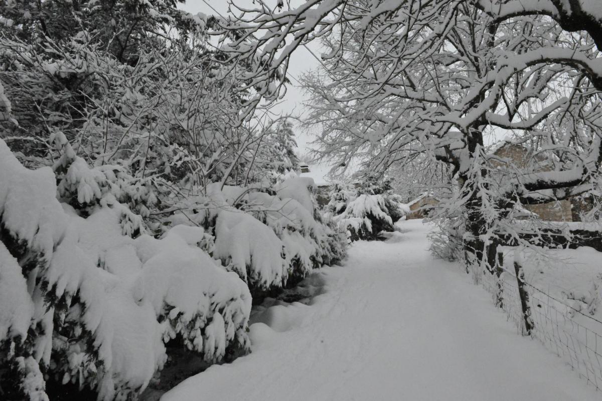 Arbres ferme auberge le gazy sous la neige